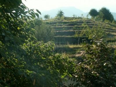 Agroturismo La Rocca della Rosa